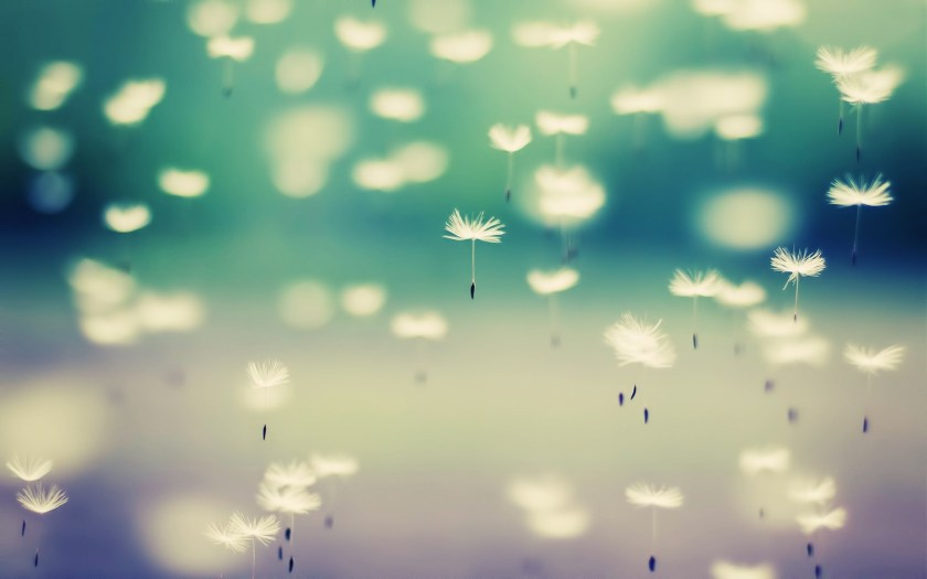 dandelion-flying-seeds-hd-wallpaper